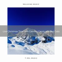 The Outdoor Library - Christmas Holidays in the Winter Woods is Magical with Classic Melodies