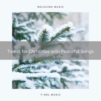 Sounds of Nature Relaxation - Tweet and Carols for Best Winter Holidays and Relax