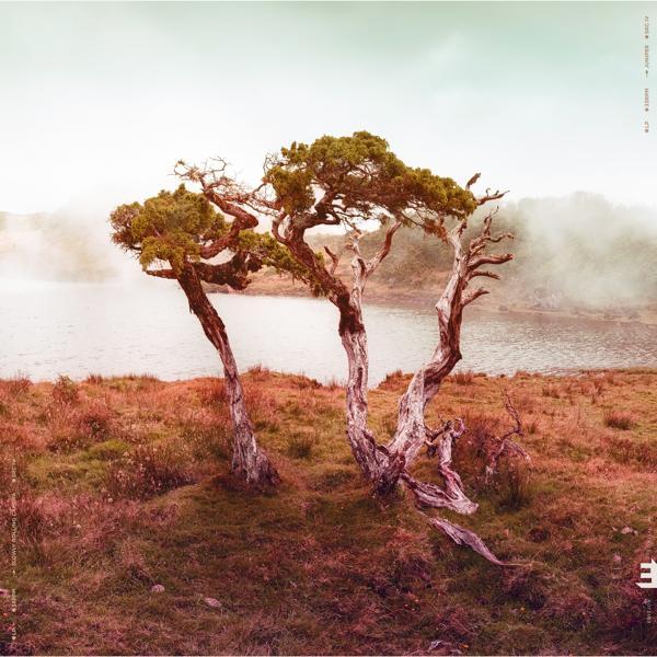 Альбом: Juniper